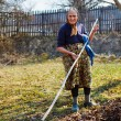 Senior woman spring cleaning in a walnut orchard — Stock Photo #9820279