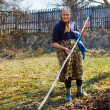 Senior womspring cleaning in walnut orchard — Stok Fotoğraf #9820279