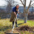 Senior woman spring cleaning in a walnut orchard - Stock Photo