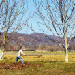 Stock Photo: Kid cleaning in walnut orchard
