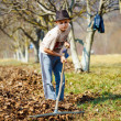 Kid cleaning in an walnut orchard — Stockfoto