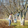 Kid cleaning in an walnut orchard - Stock Photo