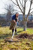 Senior woman spring cleaning in a walnut orchard — Stock Photo