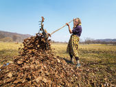 Senior woman with a rake — Stock Photo