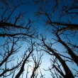 Spooky branches seen from below — Stok fotoğraf