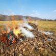 Fire made with dead leaves in the countryside — Stock Photo