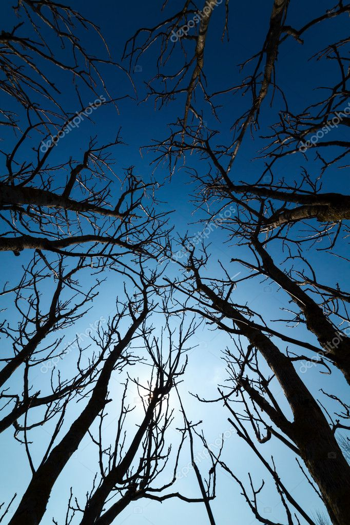 Tall trees branches silhouettes against the deep blue sky — Stock Photo #9883288