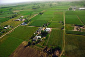 Aerial view of green fields — Stock Photo