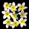 Frangipani — Stock Photo #7980251