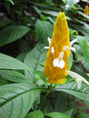 Bahçe ortamında tropik çiçekler — Stok fotoğraf