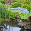 Lush garden pond — Stock Photo