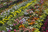 Beautiful Bed of Flowers — Stock Photo