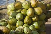 Banda nabídková kokosová — Stock fotografie
