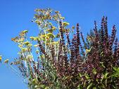 Blommande äng nära skog, olika örter — Stockfoto