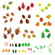 Royalty-Free Stock Vector Image: Leaf, collection for designers