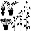 Collection, for designers, plant vector — Imagens vectoriais em stock