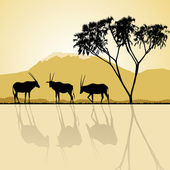 African landscape flora and fauna in sunset time with antelopes. — Vetorial Stock