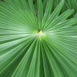 Stock Photo: Green big leaf - exotic plant