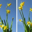 Set. Spring flowers on a background of blue sky. — Lizenzfreies Foto