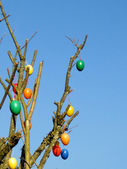 Some colourfull easter eggs hanging at branches — Stock Photo