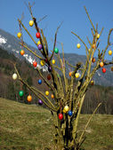 Some colourful easter eggs hanging at branches — Stock Photo