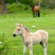 Stock Photo: Foal in field