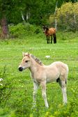 Foal in field — Stockfoto