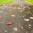 Stock Photo: Path autumn