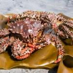 Crab (Paralithodes brevipes (Miln - Edwards et Lucas) — Stock Photo #10450852