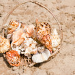 Basket with seashell — Stock Photo