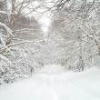 Stock Photo: Snow road