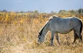 Light horse — Foto de Stock
