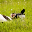 Calf grazes — Stock Photo