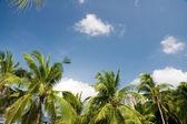 Palm trees — Foto Stock