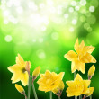 yellow  blumen — Stockfoto