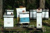 Beehive — Stockfoto