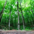 Bright green forest — Stock Photo
