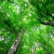 Bright light green forest — Stok fotoğraf