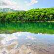 Picturesque scenery with forest lake — Stockfoto