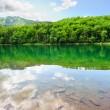pittoreska landskap med skogssjö — Stockfoto