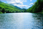 Bright sunny forest lake — Stock Photo