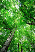 Bright light green forest — Stock Photo