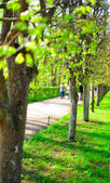 Spring alley in the park — Stock Photo