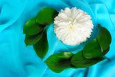 Nature morte avec un chrysanthème — Photo