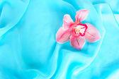 Beautiful pink orchid — Stock Photo