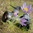 Stock Photo: Spring flower and camera