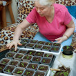 Woman takes care of the seedlings — Stock Photo