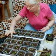 Woman takes care of the seedlings — Stock Photo #9789882