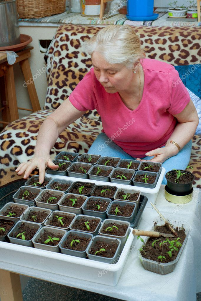 An elderly woman takes care of the seedlings — Stock Photo #9789882
