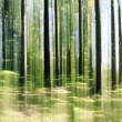 Forest vertical motion blur - Stock Photo